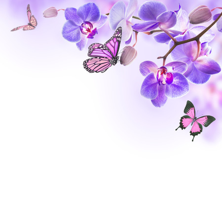 blue orchid: Floral background of tropical orchids and  butterfly