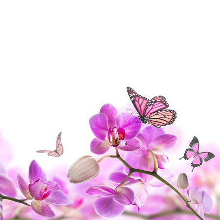 blooming. purple: Floral background of tropical orchids and  butterfly