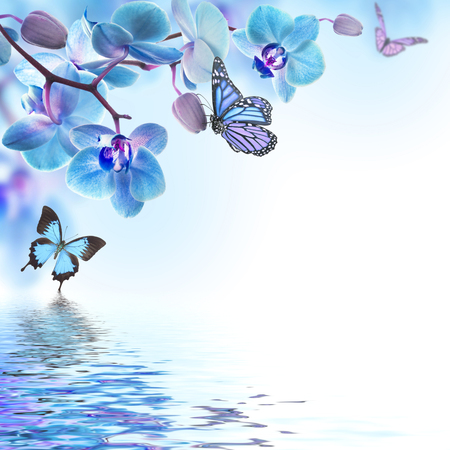 Floral background of tropical orchids and  butterfly photo