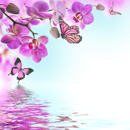 purple butterfly: Floral background of tropical orchids and  butterfly