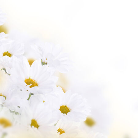 Spring bouquet of daisies, floral background photo