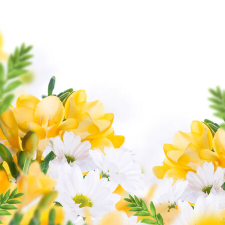 Spring yellow primrose and daisies, floral background Stok Fotoğraf