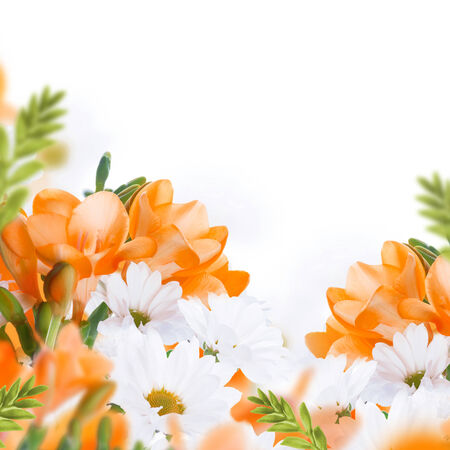 Spring yellow primrose and daisies, floral background photo