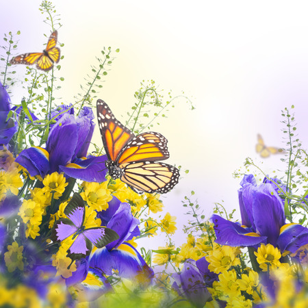 butterfly on flower: Blue irises with yellow daisies, floral background.
