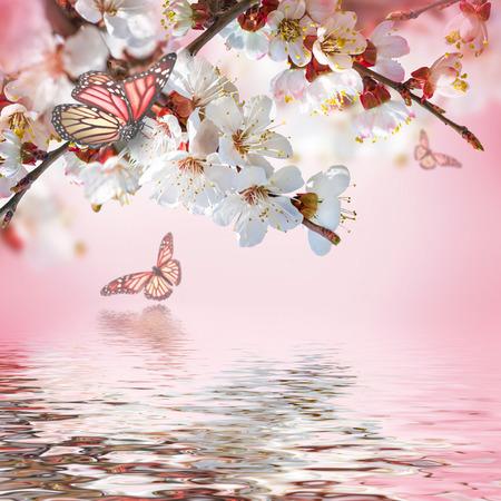 papillon rose: fleurs d'abricots au printemps, fond floral Banque d'images