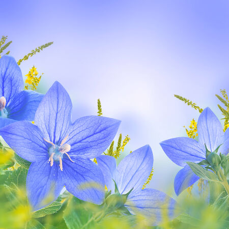 Bouquet of bells, floral background photo
