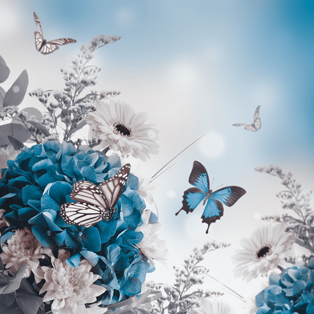 purple butterfly: Bouquet from blue hydrangeas and  butterfly, a flower background