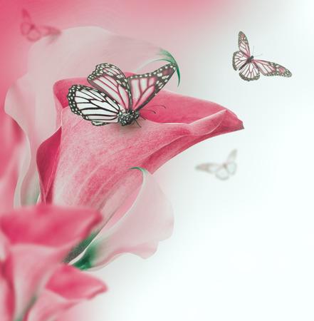 papillon rose: Bourgeons lumineux callas et papillon, fond floral