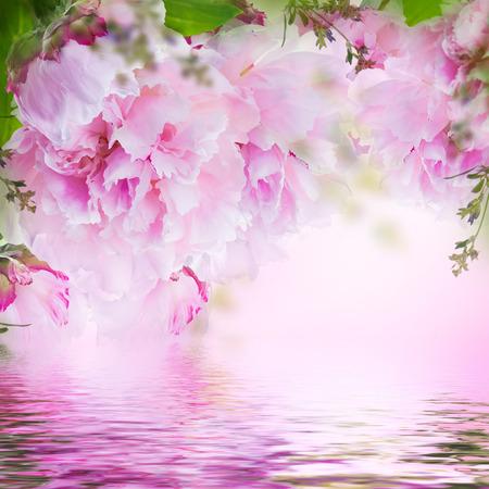 papillon rose: Floral background de roses et de papillons, de fleurs sauvages