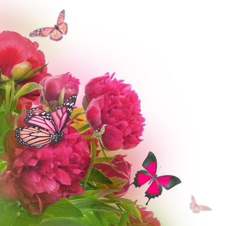 Bouquet of pink peonies and butterflies, floral background photo