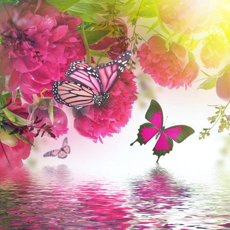 papillon rose: Bouquet de pivoines et de papillons roses, fond floral