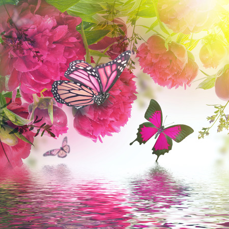 rose butterfly: Bouquet of pink peonies and butterflies, floral background