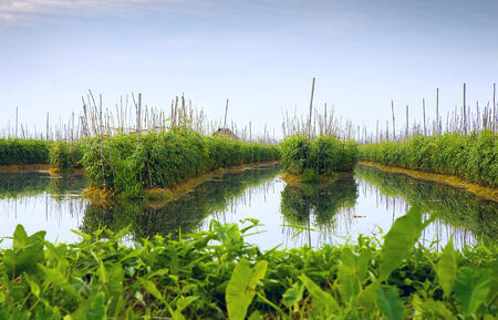 inle: Floating gardens on Inle Lake, Myanmar Stock Photo
