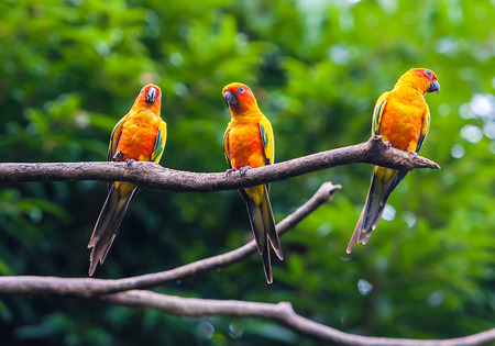 Exotic parrots sit on a branch, wildlife photo