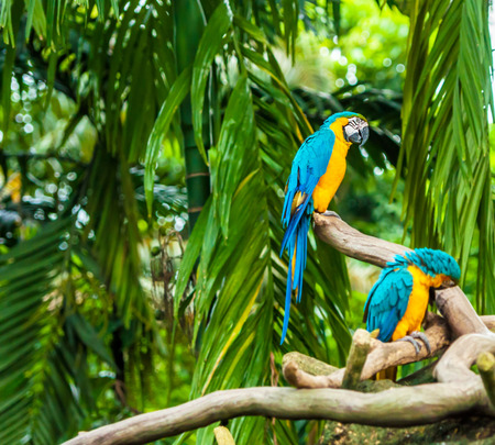 blue parrot: Exotic parrots sit on a branch, wildlife Stock Photo