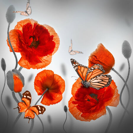 Red poppies field and blue cornflowers,  butterfly photo