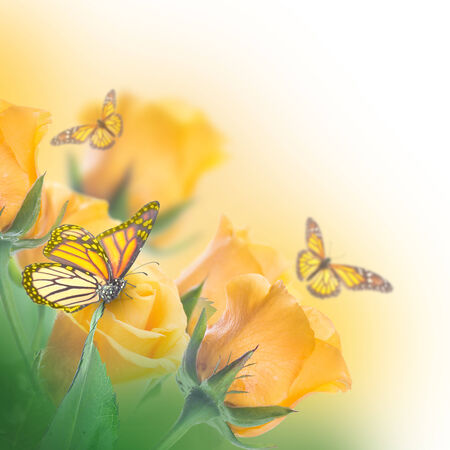 Bouquet of yellow roses, butterfly Stok Fotoğraf