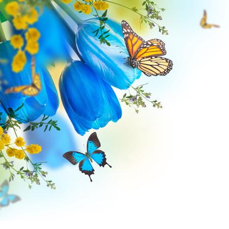 bouquet fleurs: Tulipes bleues avec mimosa et le papillon, spring background Banque d'images