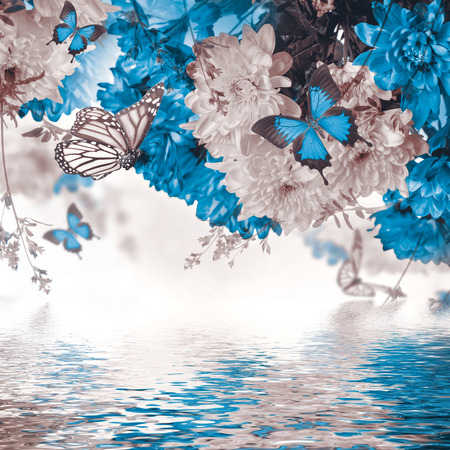 papillon: Chrysanth�me frais jaune et bleu, papillon