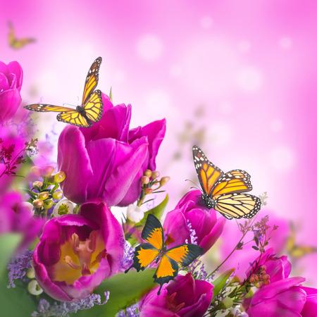 mariposas amarillas: Tulipanes azules con mimosa y la mariposa Foto de archivo