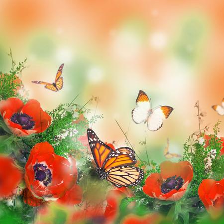 amapola: Campo de amapolas y la hierba verde y la mariposa Foto de archivo