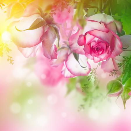 and bouquet: Bouquet di rose fresche, fiori sfondo luminoso. Archivio Fotografico