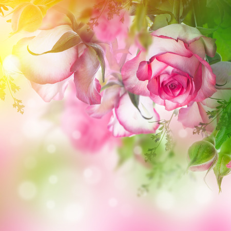 Bouquet of fresh roses, flower bright background.