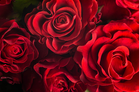 bunch of red roses: Bouquet of fresh roses, flower bright background.
