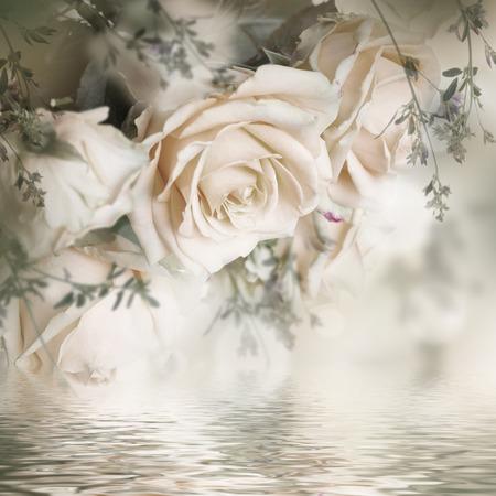 Mooie rozen en vlinder, bloem, bloemenachtergrond