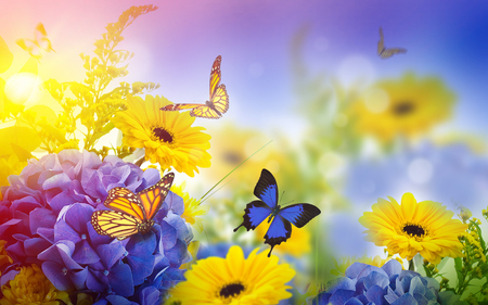 vibrant background: Amazing background with hydrangeas and daisies. Yellow and blue flowers on a white blank. Floral card nature. bokeh butterflies. Stock Photo