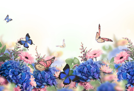 Amazing background with hydrangeas and daisies. Yellow and blue flowers on a white blank. Floral card nature. bokeh butterflies. Foto de archivo