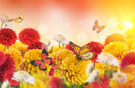 秋の花、かえでおよびカシの黄ばんだ葉。菊の背景。