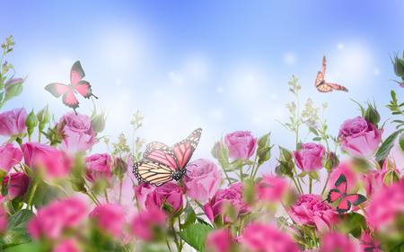 Bouquet di rose rosa con farfalle, fiori da giardino. Sfondo floreale.