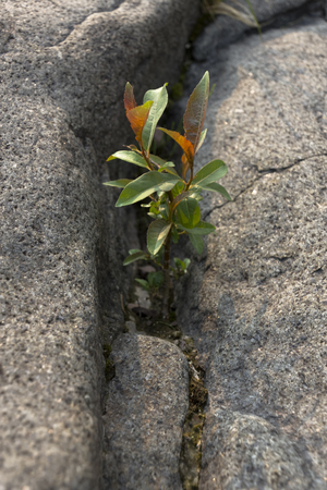 crevice: A small plant growing through the cracks of a rock