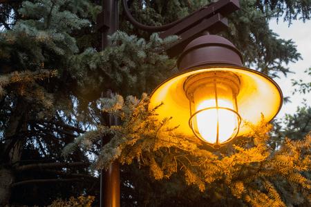 A lamp illuminates a pine tree at dusk in Edina, Minnesota. Stock fotó