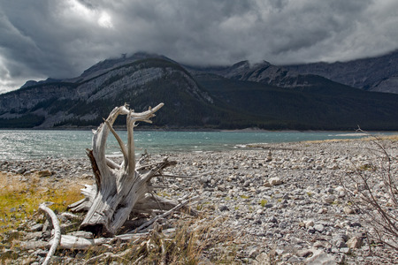 Driftwood near the shore of a lake in the middle of Kananaskis country.