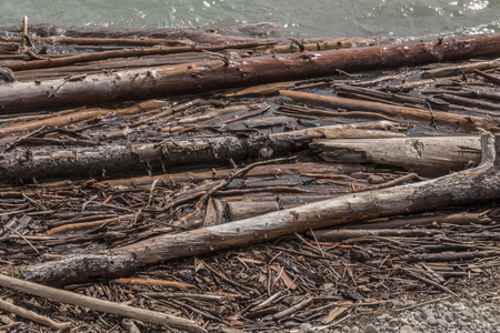Tree trunks and other bits of wood, close to shore on Ghost Lake in Alberta, Canada.