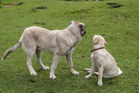 two dogs looking away photo