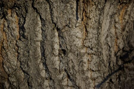 De bois d'automne Banque d'images