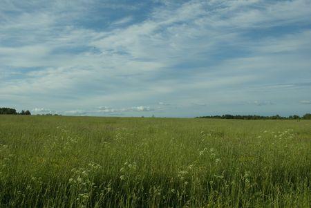 Russian field 3