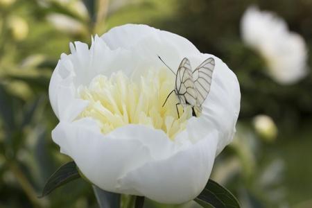 Dans une fleur Banque d'images