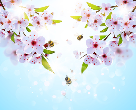 Spring background with japan cherry flowers and bumble bees.