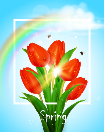 Spring background with red tulips and rainbow.