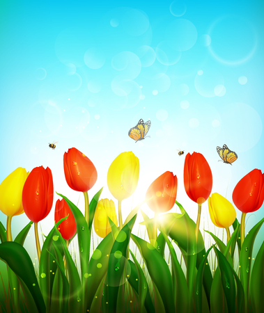 Spring background with red and yellow tulips.