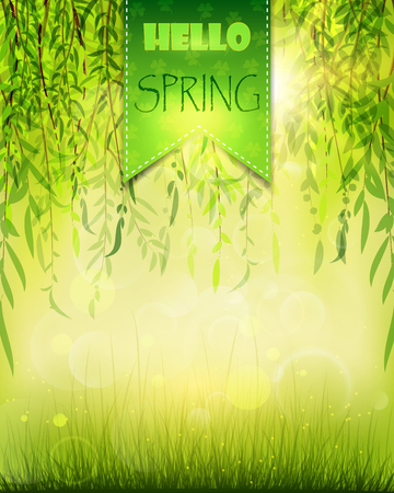 Spring background with willow and grass
