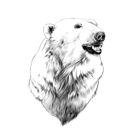 the head of the polar bear, profile, looking to the side, sketch graphics vector black and white drawing Vectores