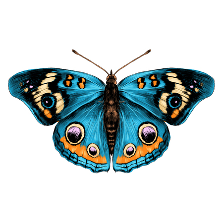 butterfly with open wings top view of symmetry, sketch the graph of vector color drawing butterfly with blue wings Фото со стока - 74346506