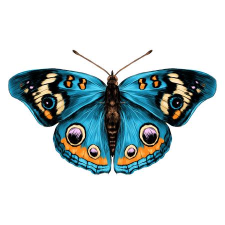 Farfalla con le ali aperte vista dall'alto di simmetria, disegnare il grafico del vettore colore disegno farfalla con ali blu Archivio Fotografico - 74346506
