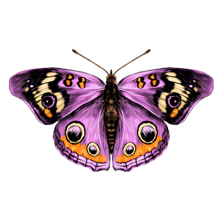 Purple butterfly with open wings top view of symmetry, sketch the graph of vector color drawing butterfly with pink wings.