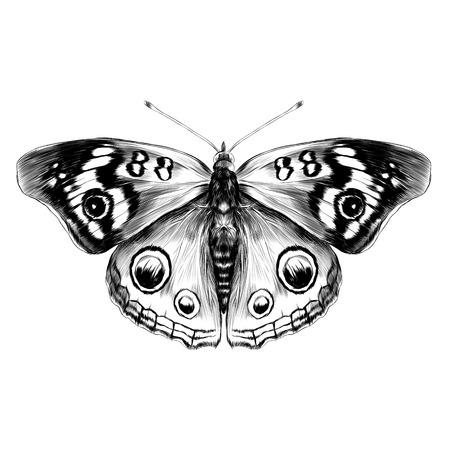 Mariposa blanco y negro con la opinión superior de las alas abiertas de la simetría, dibujo blanco y negro del vector de los gráficos del bosquejo. Ilustración de vector